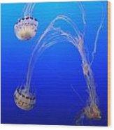 Jellyfish 1 Wood Print