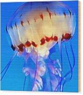 Jellyfish 3 Wood Print