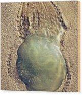 Jellyfish Wood Print by Carlos Caetano