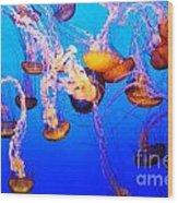 Jellyfish In Abundance Wood Print