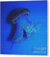 Surreal Australian Jellyfish In Blue Wood Print