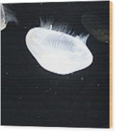 Jellyfish - National Aquarium In Baltimore Md - 121221 Wood Print by DC Photographer