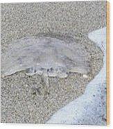 Jellyfish On The Sand Wood Print