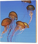 Jellyfish Swarm Wood Print