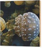 Jellyfish Swimming Right Wood Print