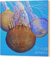 Jellyfish Trio Wood Print