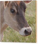Jersey Cow Portrait Wood Print