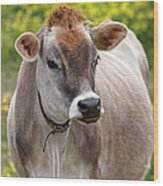 Jersey Cow With Attitude - Vertical Wood Print