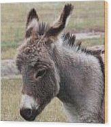 Jerusalem Donkey Wood Print