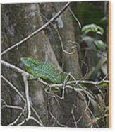 Jesus Christ Lizard Wood Print