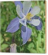 Jewel In The Glade  Wood Print
