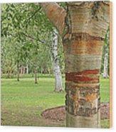 Jewel In The Woods Wood Print