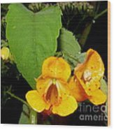 Jewel Weed Wood Print