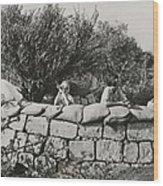 Jews Guard Their Settlement Wood Print