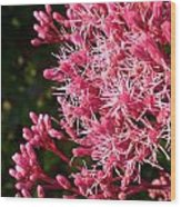 Joe Pye Weed Wood Print