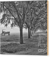 John Deer Tractor And The Avenue Of Oaks Wood Print by Scott Hansen