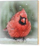 Jolly Old ....... Cardinal  Wood Print