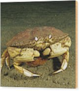 Jonah Crab Wood Print