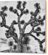 Joshua Black And White Wood Print