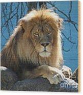 Joshua The Lion On His Rock Wood Print
