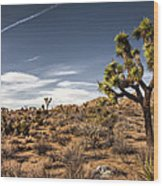 Joshua Tree 15 Wood Print