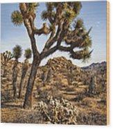 Joshua Tree 16 Wood Print