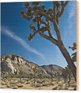 Joshua Tree Afternoon Wood Print