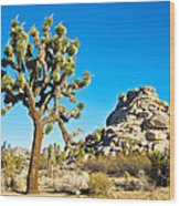 Joshua Tree And Jumbo Rocks Near Quail Spring In Joshua Tree Np-ca  Wood Print