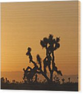 Joshua Tree At Sunset Wood Print