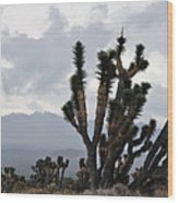 Joshua Tree Forest Ivanpah Valley Wood Print