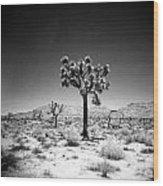 Joshua Tree Holga 1 Wood Print