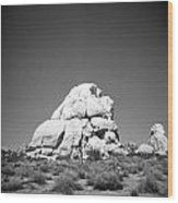 Joshua Tree Holga 9 Wood Print