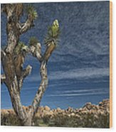 Joshua Tree In Joshua Tree National Park No. 279 Wood Print