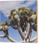 Joshua Tree In Snow Wood Print