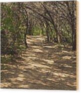 Journey Through The Cedars Wood Print