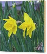 Jovial Jonquils Wood Print