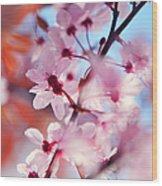 Joy Of Spring. Pink Spring In Amsterdam Wood Print