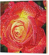 Joyful Rose Wood Print