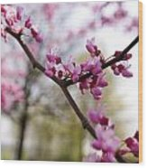 Judas Tree Blossom Wood Print by John Holloway