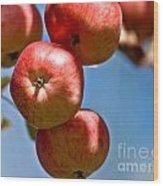Juicy Harvest Wood Print