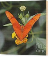 Julia Butterfly 1 Wood Print