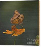 Julia Butterfly Wood Print