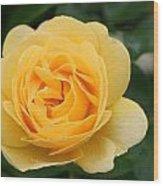 Julia Child Floribunda Rose Wood Print