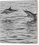 Jump For Joy - Common Dolphins Leaping. Wood Print