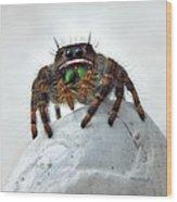 Jumper Spider 2 Wood Print