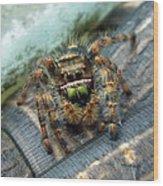 Jumper Spider 3 Wood Print