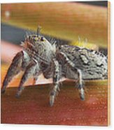 Jumper Spider Wood Print