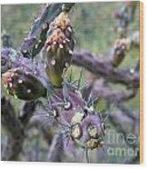 Jumping Cholla Catalina Foothills Wood Print
