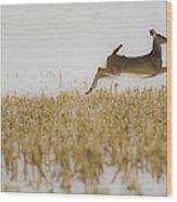 Jumping Doe In Corn Field Wood Print