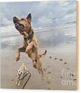 Jumping Dog Wood Print by Eldad Carin